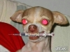 mick-webbs-dog-with-syringe