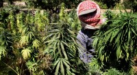 Hezbollah Profits From Hash as Syria Goes to Pot Despite hundreds of millions of dollars spent by the United States in recent years to fight drugs in Lebanon, cannabis has […]